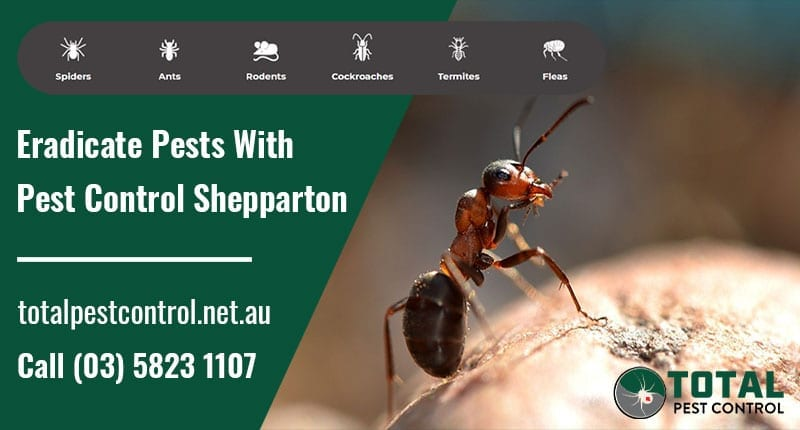 Eradicate Pests With Pest Control Shepparton, VIC