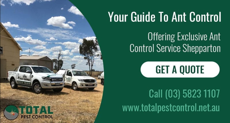 Your Guide To Ant Control Service Shepparton