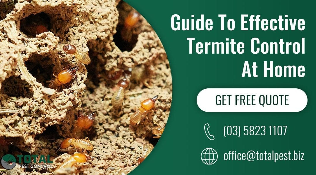 Guide To Effective Termite Control At Home