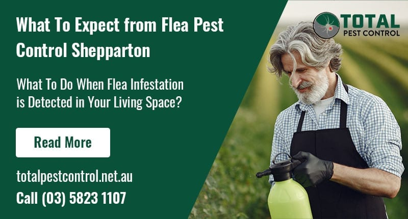 What To Expect from Flea Pest Control Shepparton