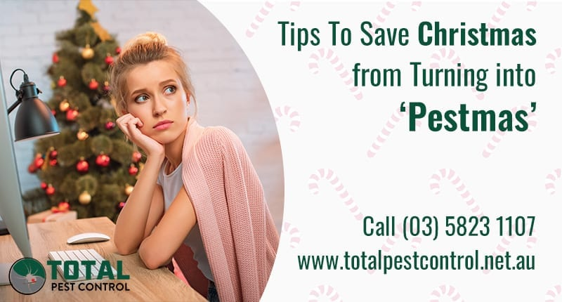 5 Pest Control Shepparton Tips To Save Christmas from Turning into 'Pestmas'