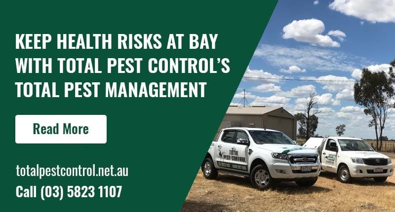 Keep Health Risks At Bay With Total Pest Control's total pest management