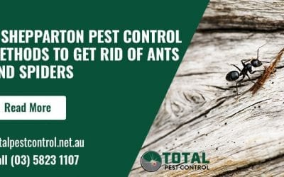 5 Shepparton Pest Control Methods To Get Rid of Ants and Spiders