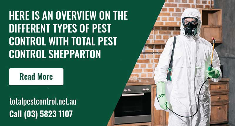 Here Is An Overview On The Different Types Of Pest Control With Total Pest Control Shepparton