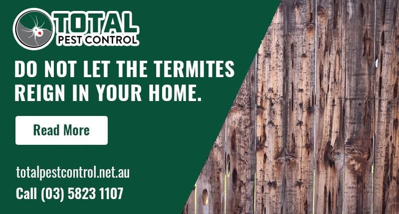 Do Not Let The Termites Reign In Your Home. Get Termite Protection Shepparton Today