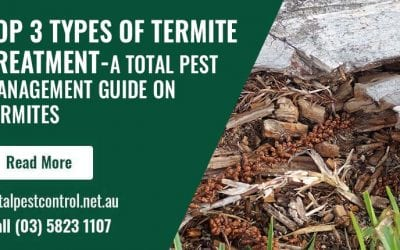 Top 3 Types Of Termite Treatment Shepparton – A Total Pest Management Guide on Termites