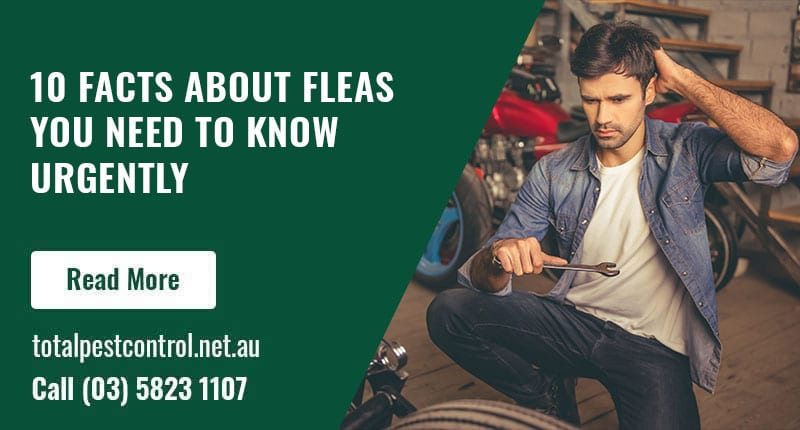 10 Facts About Fleas You Need to Know Urgently