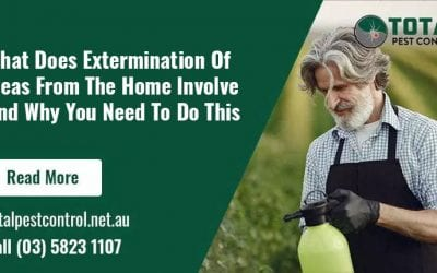 What Does Extermination Of Fleas From The Home Involve And Why You Need To Do This