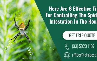 Here Are 6 Effective Tips Of Controlling The Spider Infestation In The House