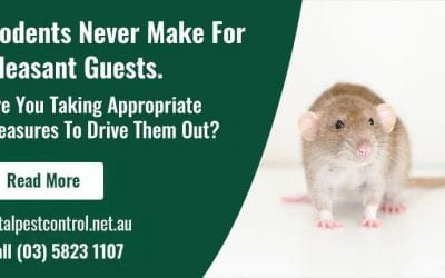 Rodents Never Make For Pleasant Guests. Are You Taking Appropriate Measures To Drive Them Out?