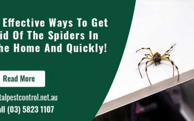 6 Effective Ways To Get Rid Of The Spiders In The Home And Quickly!