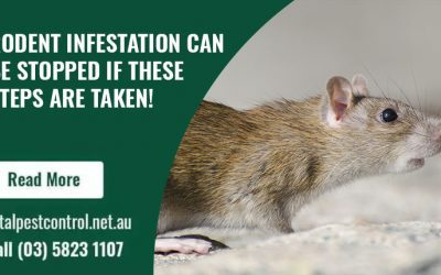 Rodent infestation can be stopped if these steps are taken!