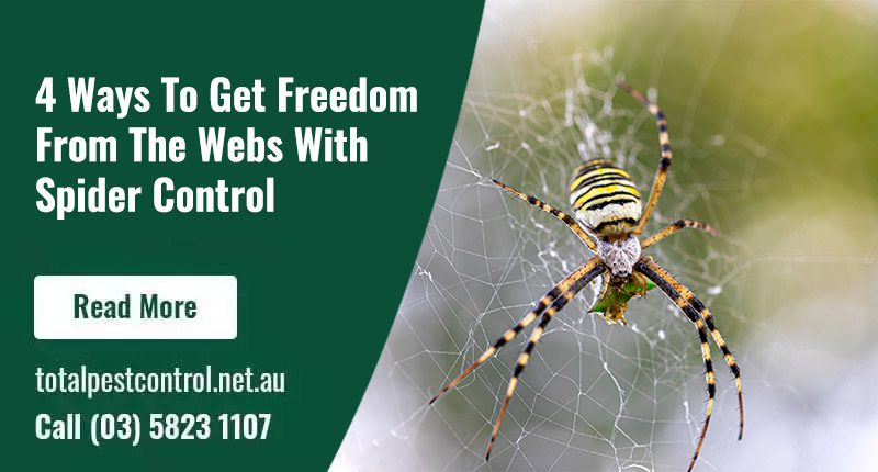 Can you get pest control for spiders?