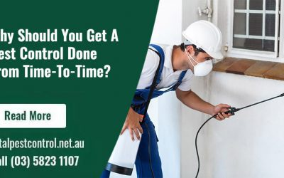 Why Should You Get A Pest Control Done From Time-To-Time?